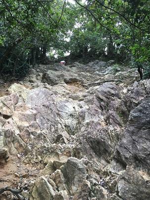 岐阜城へ登る登山道「馬の背」入ってからの道