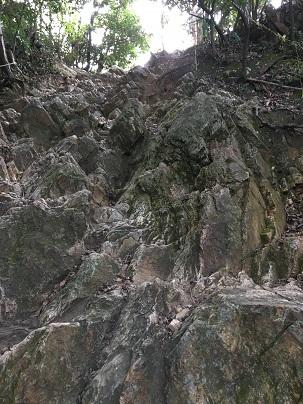 岐阜城へ登る登山道「馬の背」中腹付近