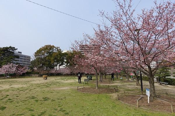 高松城桜の馬場