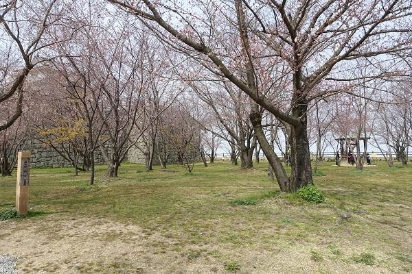 丸亀城二の丸桜