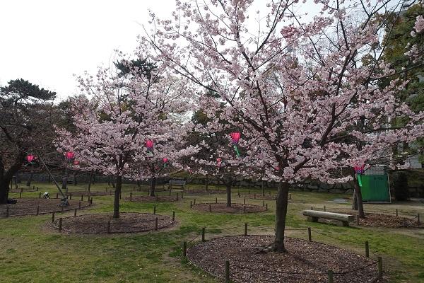 高松城跡の桜の馬場