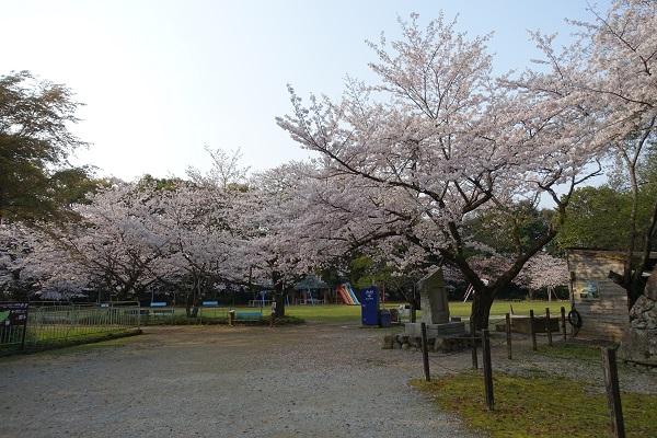 宇和島城二の丸桜