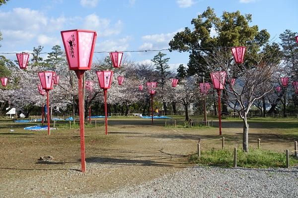 高知城二ノ丸桜