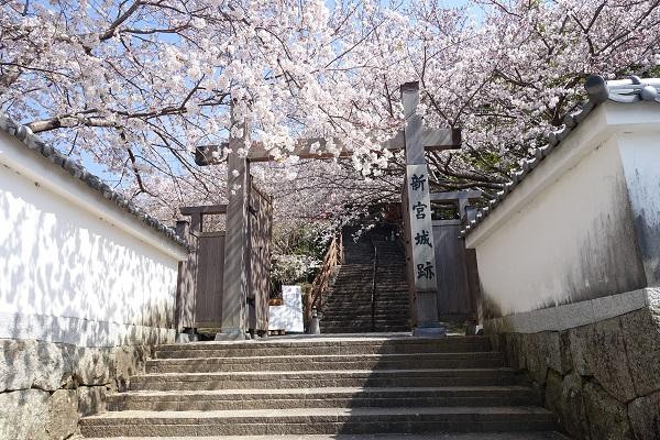 新宮城跡大手門の桜