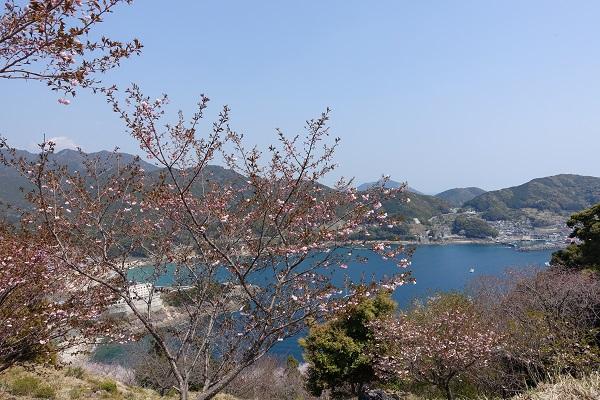 鬼ヶ城の展望台からの桜