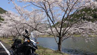 下北山スポーツ公園桜湖畔