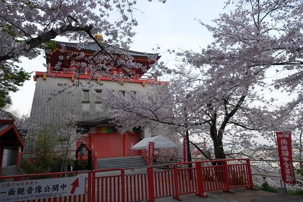 紀三井寺桜