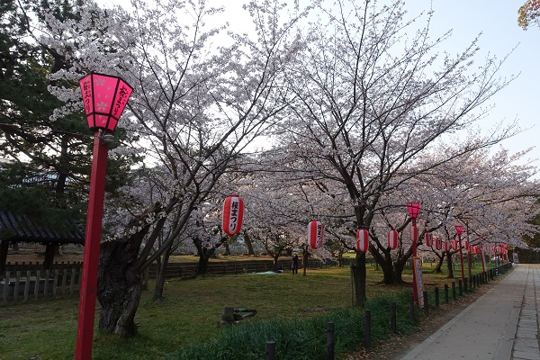 和歌山二ノ丸桜