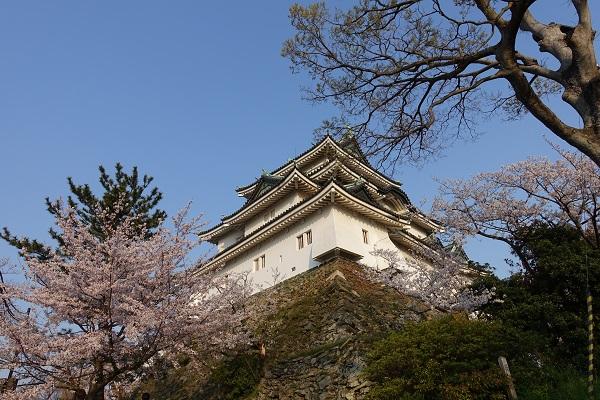 和歌山城天守と桜
