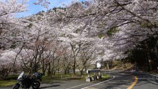 奥琵琶湖パークウェイ桜の広場