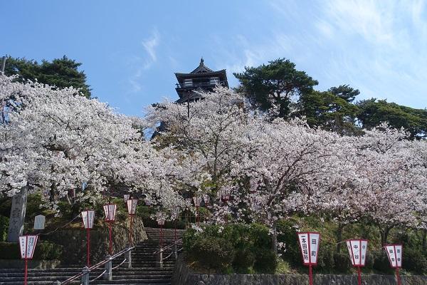丸岡城を麓から見る
