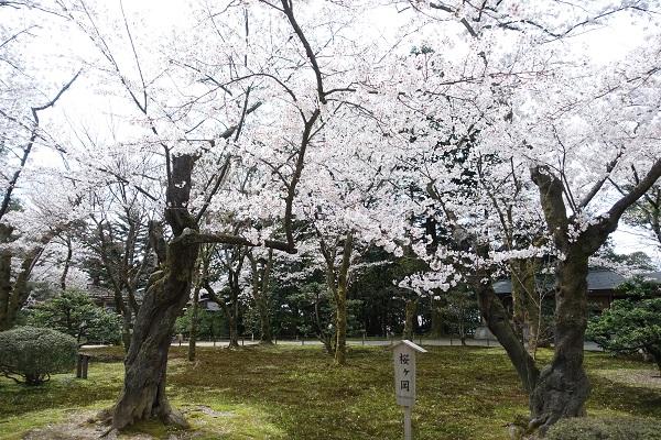 兼六園桜ヶ丘