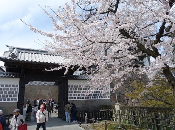 金沢城と石川門と桜