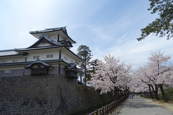 五十間長屋と桜