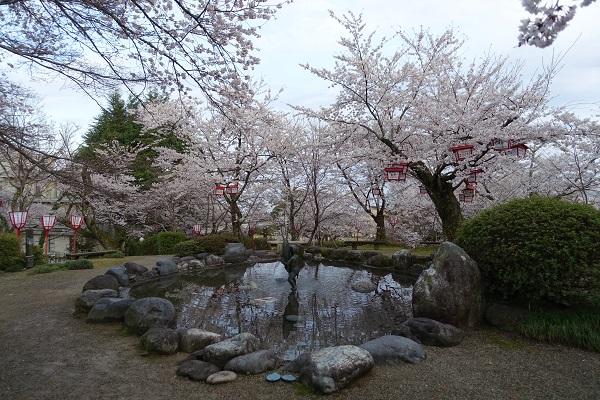朝日山公園池と桜