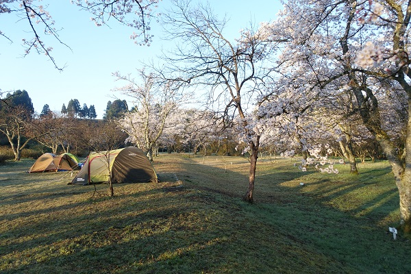 上和田緑地キャンプ場サイト右側