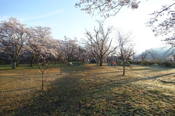 上和田緑地キャンプ場サイト左側