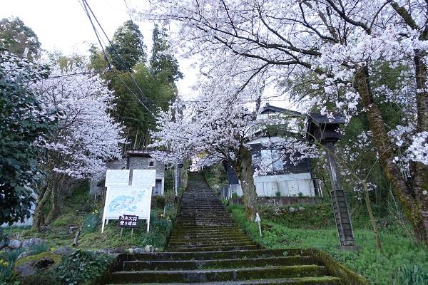 城ケ山公園の桜階段