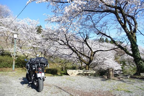 城ケ山公園と桜とバイク