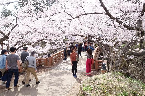 高遠城桜雲橋
