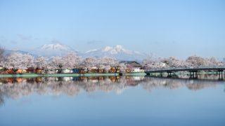 臥竜公園の桜と中央アルプス