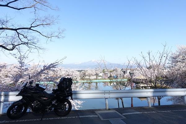 臥竜公園の桜とバイク
