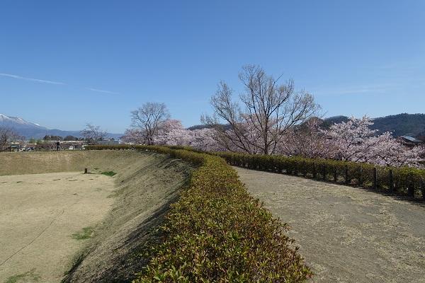 松代城二の丸土塁と桜