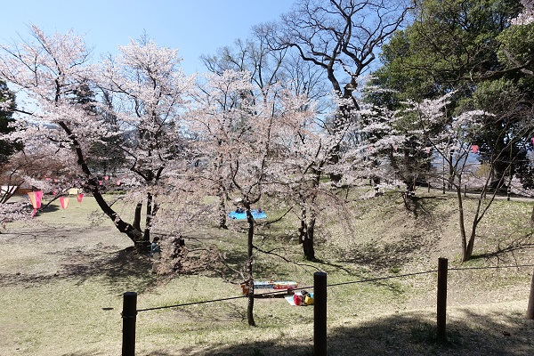 上田城の桜と本丸