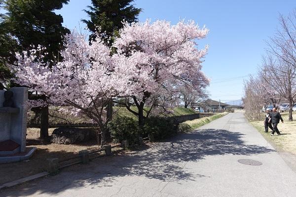 龍岡城の桜入口付近