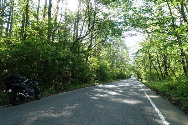 滝沢林道の道
