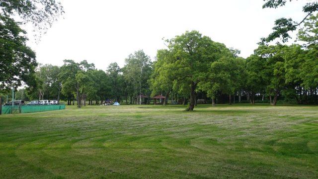 メインサイトの平坦な芝