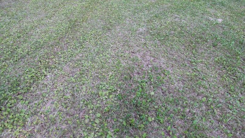 地面は薄い芝