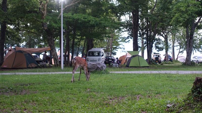 夕食食べてたら鹿がごはんを食べに